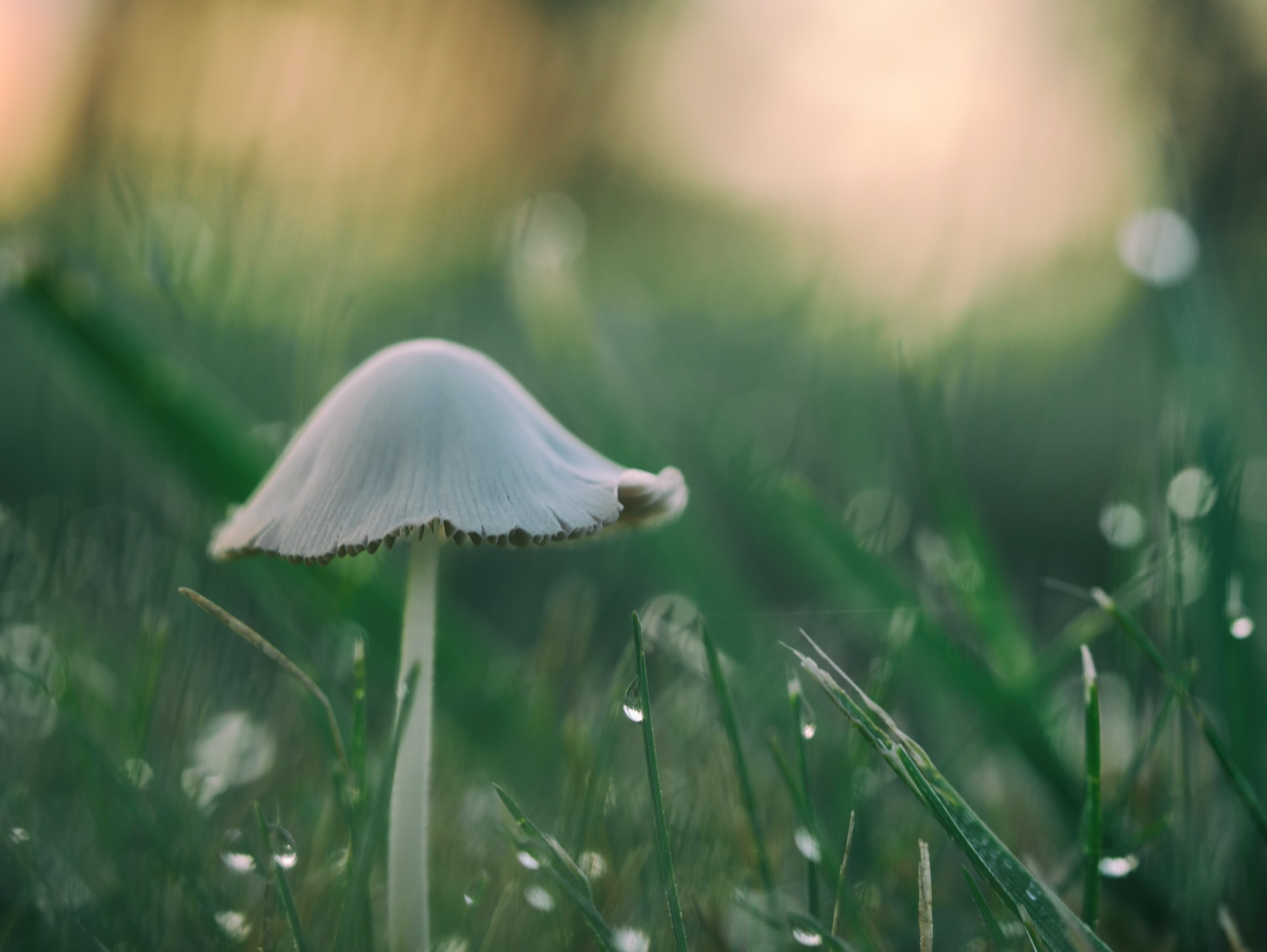 achtergrond-paddenstoel