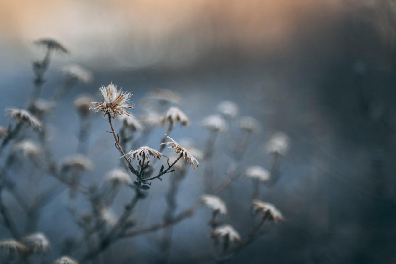 achtergrond-winter-vibes