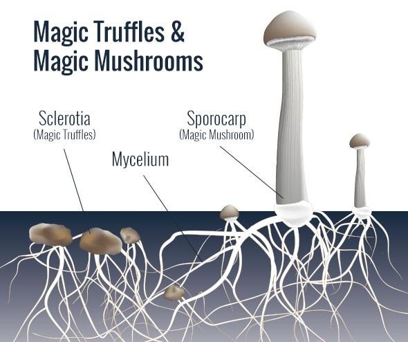 afbeelding van trufflemagic.com