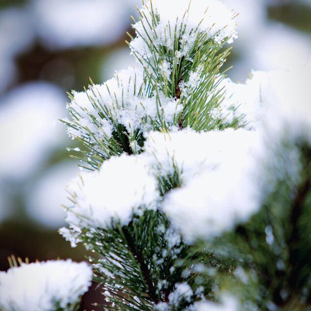 den sneeuw